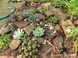 Rock Garden Succulents Succulents Szukaj W Ogrody Pinterest Succulent