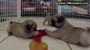 craigslist houston dogs danspalding