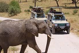 safari land cruiser tanzania safari adventure wilderness inquiry