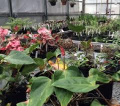 terrarium garden manteo nc 27954