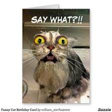 funny cat birthday card by strange wishes greeting cards willy