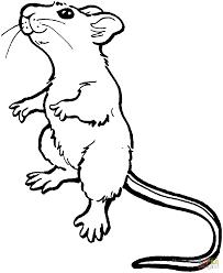 cute kangaroo rat coloring page free printable coloring pages