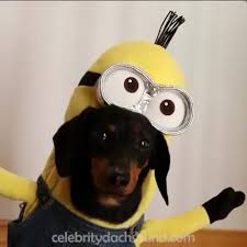 Dog Minion Halloween Costumes 10 Dog Costumes Crusoe Celebrity Dachshund