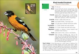 Wyoming birds images Birds of wyoming field guide jpg