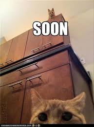 Cat Soon Meme - maybe it s just me but the soon meme is scary as hell 20 pics