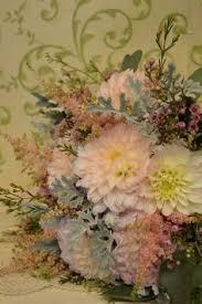 chesters flowers nimesia beautiful blooms random stuff