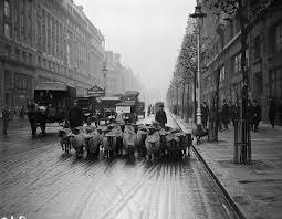 lexus hoverboard jak dziala owce na ulicach londynu smartage pl