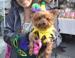 mardi gras dog helen animal center dog mardi gras parade