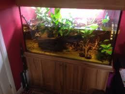 Aquarium For Home by Fish Tank Img With 1673 Jpg Aquarium For Sale Florida Fish Plants
