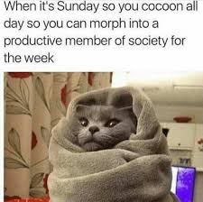 Its Sunday Meme - when it s sunday so you cocoon all day so you can morph into a