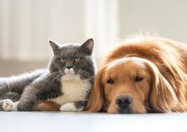 5 Things You Might Not Know Your Pet Could Be Allergic To