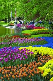 324 best garden flower bulbs images on pinterest flower