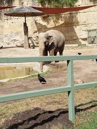 foundation news u2014 asian elephant support
