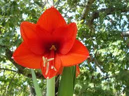 imagenes flores bellisimas flores bellísimas y exóticas fondos de escritorio