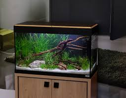 Fluval Edge Aquascape Fluval Roma 125 Featuring New Cabinets George Farmer Flickr