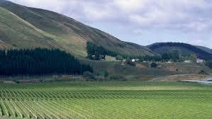 Seeking New Zealand Seeking Depth In New Zealand Sauvignon Blanc Sevenfifty Daily