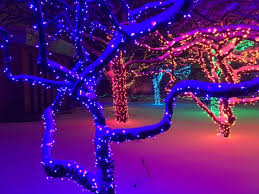 6 not to miss things at lights detroit zoo michigan