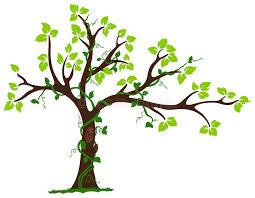 tree with liana and vine stock illustration image of bunch 28757216