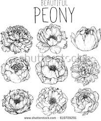 flower line drawing stock images royalty free images u0026 vectors