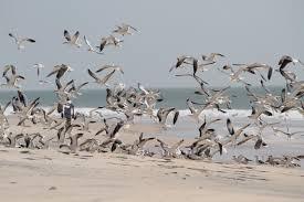 Aiz Bad Honnef Liportal Mauretanien Landesübersicht U0026 Naturraum Das