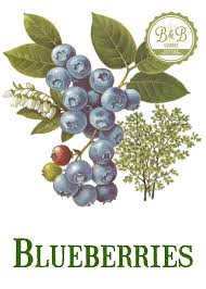 fruit by mail vintage blueberry print digital jpeg of vintage