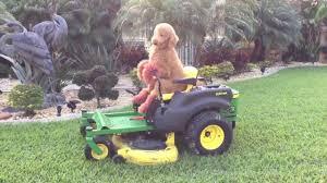 Lawn Mower Meme - dog rides lawnmower like a king youtube