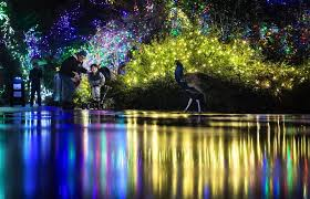 Stone Zoo Christmas Lights by Seattle Area Holiday Lights Where To See Dazzling Displays The