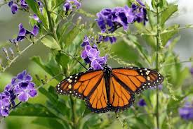 how obama s butterfly highway paves way to save embattled