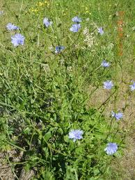 ann u0027s weekend homesteading eastern ontario homestead wildflowers