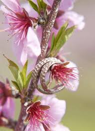 Peach Flowers News Enjoy Your Big Day In Town Blessed With Scent Of Flowers