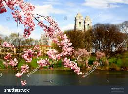 cherry blossom festival branch brook park stock photo 29115646