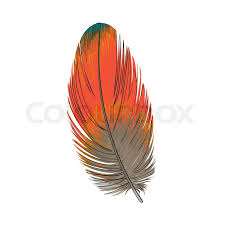 hand drawn smoth orange tropical exotic bird parrot feather
