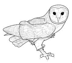 Barn Owl Holidays Barn Owl Coloring Pages Coloring Pages U0026 Pictures Imagixs