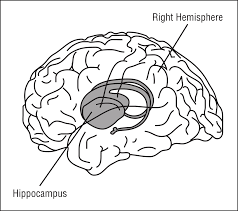 brain anatomy coloring book clipart braing in space labeled