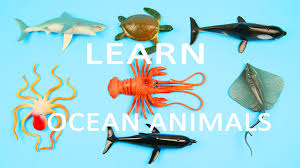 learn sea animals water animals names and sounds learning