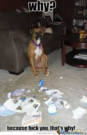 Bad Dog Meme - bad dog by jorn9999 meme center