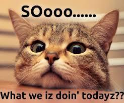 Success Cat Meme - cat meme what we doin today on we heart it
