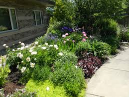 weeding wild suburbia all about prairie rose u0027s garden may gbbd planting frenzy month