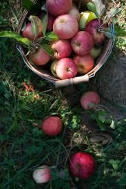 best 25 apple orchard ideas on pinterest apple orchards near me