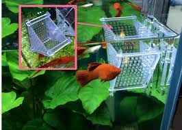 acrylic fish ring holder images Mini acrylic fish water flea feeder red worm holder for aquarium jpg