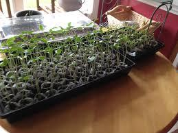 starting seeds indoors and veggie gardening class