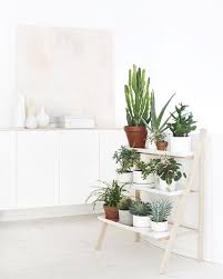 Ikea Plant Ideas by Best 25 Indoor Floor Plants Ideas On Pinterest Living Room