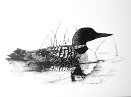 birds sketches grayscale loon 3016x2230 wallpaper high quality