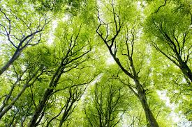 bright green canopy forest wall mural muralswallpaper co uk