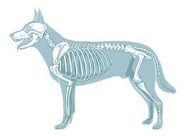 Tierarzt Bad Wildungen Fachtierärzte Für Orthopädie In Deutschland Dogs U2013 Europas