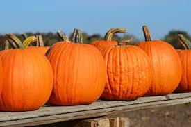 free images orange produce halloween gourd carve jack o