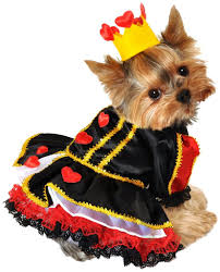 dog candy corn witch costume cute halloween costumes for small dogs i love my chi