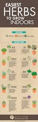 Winter Indoor Garden - easiest herbs to grow indoors to grow infographic and herbs