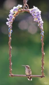 Hummingbird Flowers Best 25 Hummingbird Garden Ideas On Pinterest Hummingbird