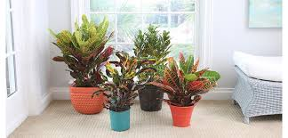 Easy Care Indoor Plants Exotic Angel Costa Farms